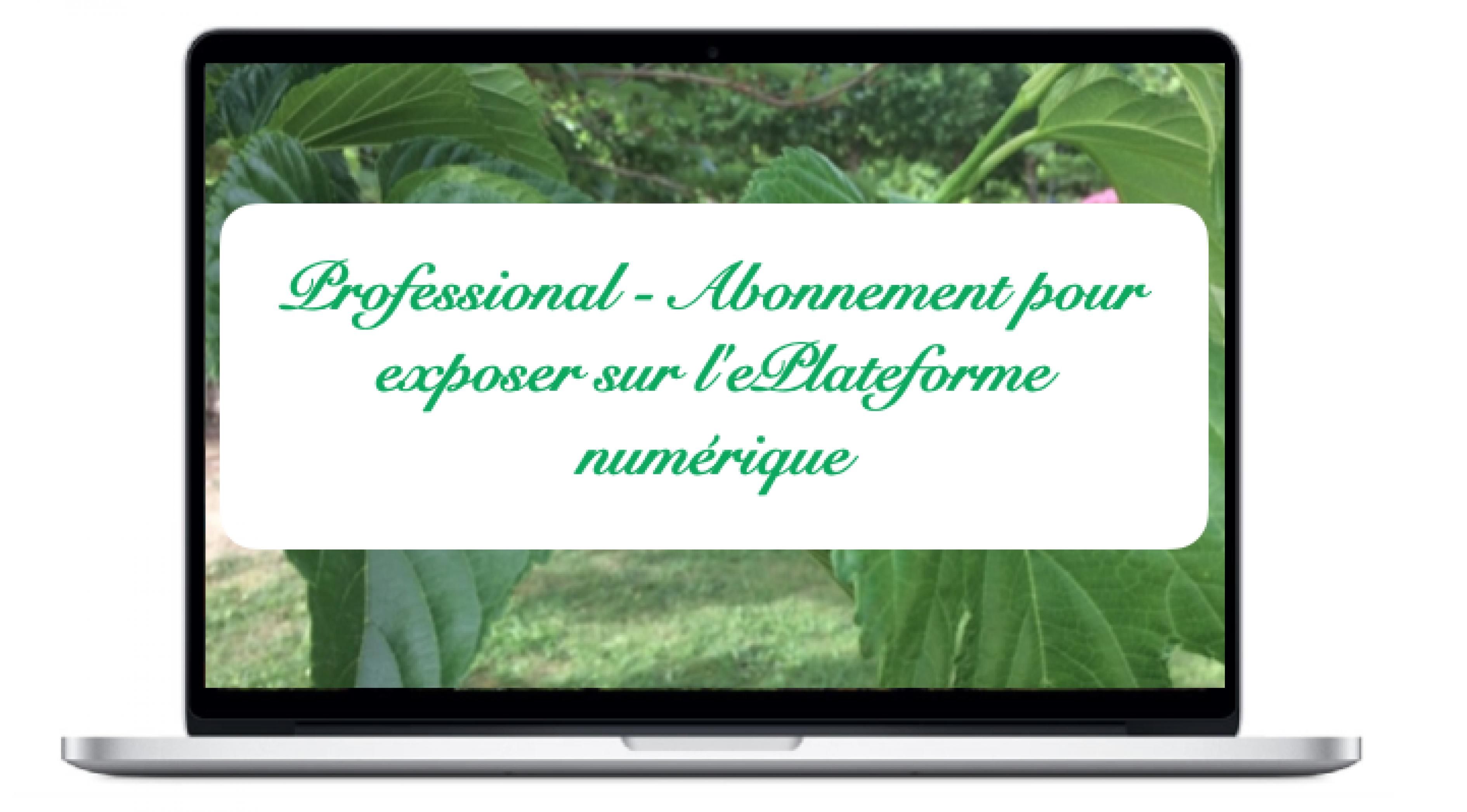 professional-abonnement-pour-exposer-sur-leplateforme-numerique_0